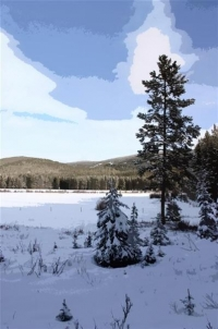 Snow Covered Mountain Meadow - Product Image