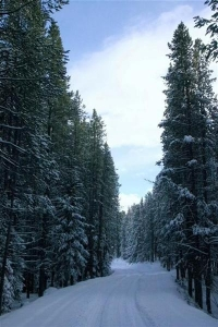 Snowy Mountain Road - Product Image
