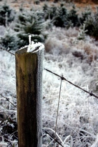 Frosted Fence Post - Product Image