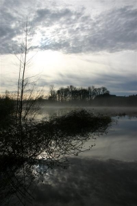 Blackberry Bushes and Clouds Reflected in a Flooded Field - Product Image