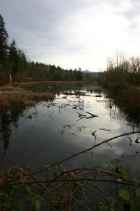 Stillwater Swamp - Product Image