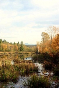 Fall in the Snoqualmie Valley Swamps - Product Image